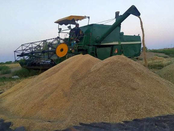 خرید گندم کشاورزان سیستان و بلوچستانی از مرز 20 هزار تن فراتر رفت
