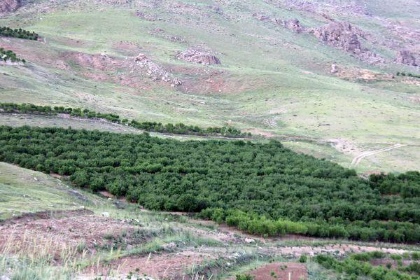 بازدید کارگروه توسعه باغات دیم از باغات شهرستان کیار