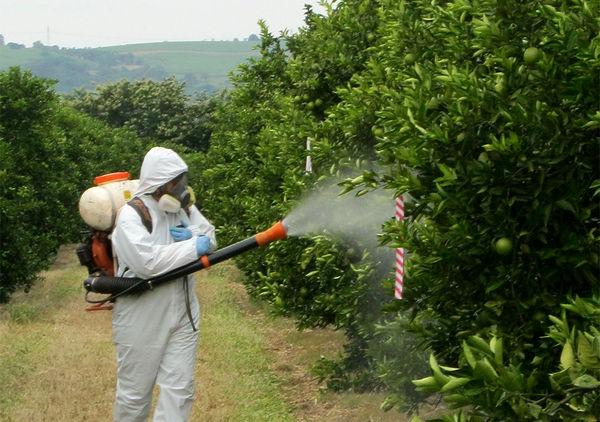 ممنوعیت استفاده از سم استامی پراید در باغات پسته از اول تیرماه