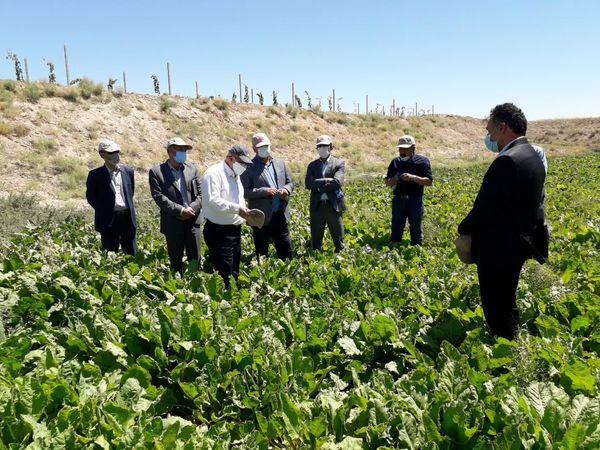توسعه مکانیزاسیون در بخش کشاورزی از اولویتهای وزارت جهاد کشاورزی است
