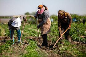 پتانسیل مغفولمانده بانوان در کشاورزی خراسان جنوبی