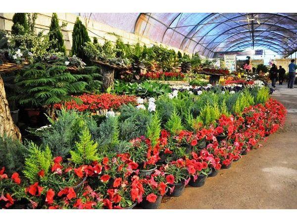 105 هزار گلدان گل از نوشهر صادر شد