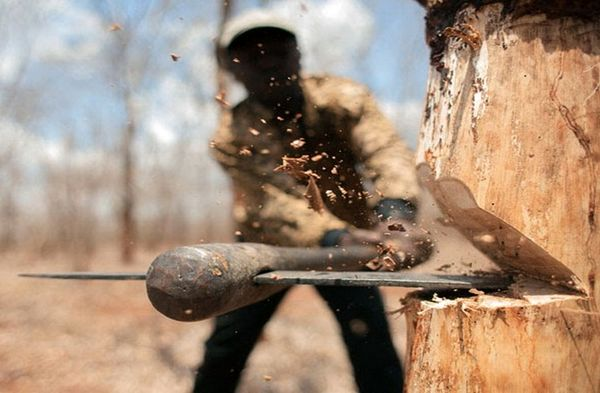 حفظ صنعت چوب به قیمت نابودی جنگل، جنایتی بزرگ