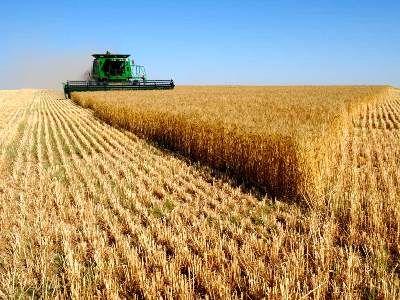 14 پروژه اقتصاد مقاومتی تحقیقاتی بخش کشاورزی