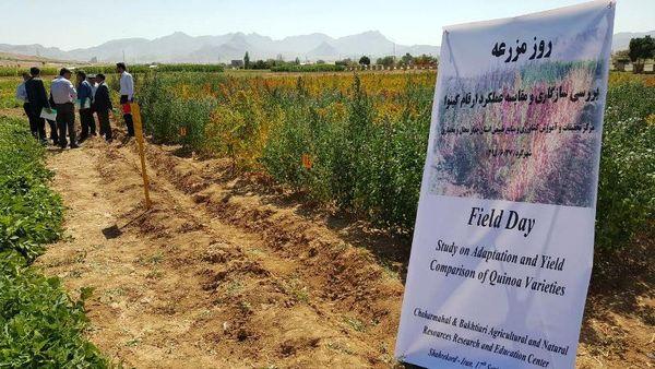 کاشت آزمایشی محصول کینوا برای اولین بار  در دهلران