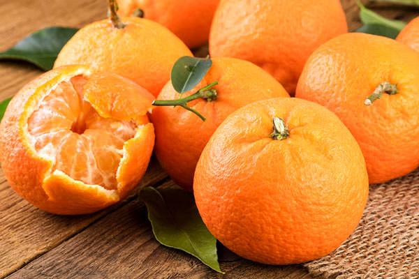 آغاز برداشت نارنگی از باغات نکا/ پیش بینی تولید 43 هزار تن