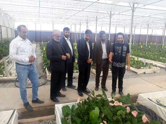 1500نفر در ورامین به کشت گل و گیاه مشغول می شوند