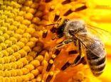 حمایت از نوآوریها در توسعه صنعت زنبورداری کشور