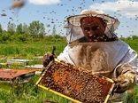اصفهان در جایگاه سوم تولید عسل در کشور