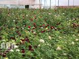 افزایش 2 برابری سطح گلخانه های کشور در دولت تدبیر و امید