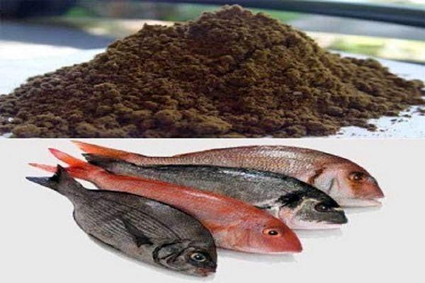 پودر ماهی ضامن بقای کارخانجات و مزارع پرورش ماهی