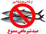 صید ماهی شیر به مدت ۲ ماه ممنونع شد
