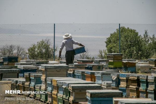 اشتغالزایی برای 5712 نفر  با تولید عسل در استان