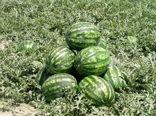 برداشت بیش از 600 هزارتن محصولات جالیزی در سیستان وبلوچستان