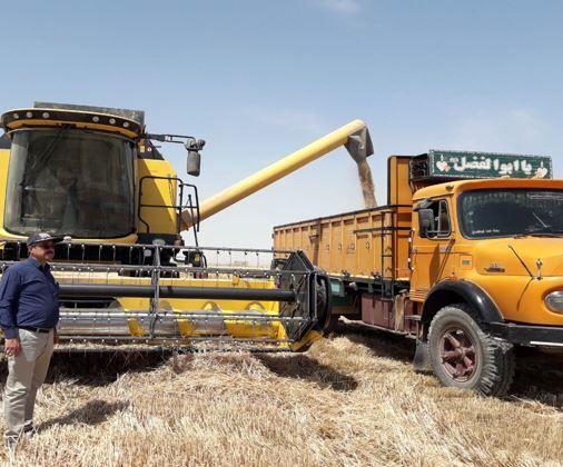 خرید گندم در خراسان شمالی از مرز ۱۰۰ هزار تن گذشت