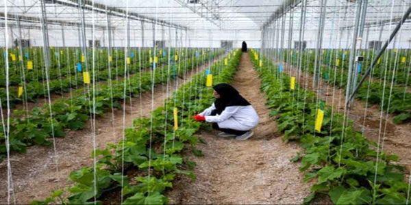 اشتیاق زیاد کشاورزان نسل جوان استان اصفهان به توسعه گلخانهها