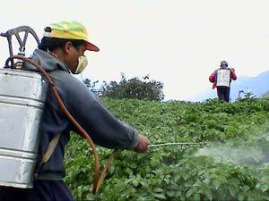 9 کشاورز نمونه کشوری از پایتخت انتخاب شدند