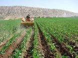 ۵۱ هزار و ۷۸۸ هکتار از مزارع این استان قزوین به کشت علوفهای اختصاص یافت
