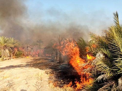 تهدید آتشسوزی در 35 هزار هکتار از مناطق جنگلی استان سمنان
