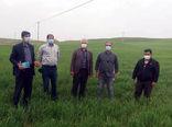 بازدید محققین و کارشناسان معین استانی از مزارع شهرستان اهر