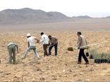اجرای بزرگترین عملیات بیابان زدایی در سطح استان بوشهر