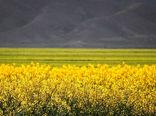آمادگی ۱۸۰ مرکز خرید محصولات کشاورزی در استان گلستان