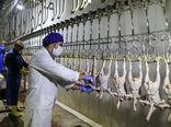 عرضه 7 هزار و 700 تن گوشت مرغ در سراسر کشور