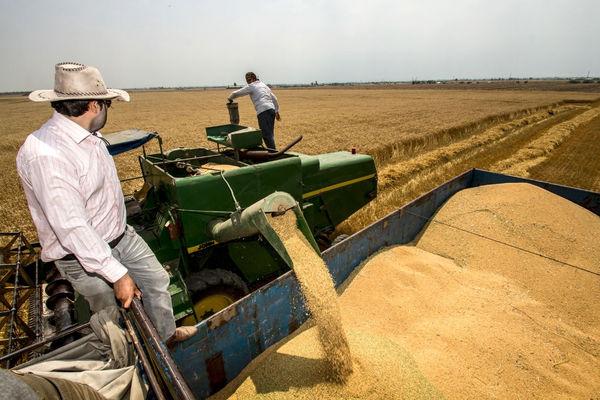 شرایط مطلوب ذخیره سازی گندم در استان البرز