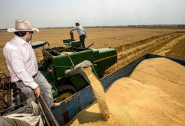 پرداخت 87 درصد بهای گندم خریداری شده از کشاورزان