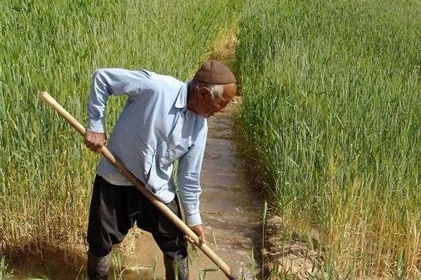 رتبه برتر کشوری در افزایش تولید و ضریب خوداتکایی محصولات کشاورزی به اصفهان رسید