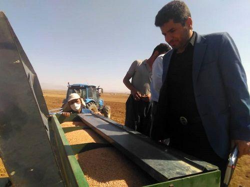 اختصاص 23 هزار هکتار به کشت شتوی در آباده