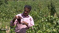 روستای حسن آباد بیدکان، قطب تولید انگور مبارکه