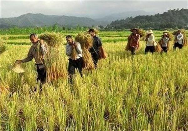 ۶۰ هزار و ۵۰۰ نفر در خراسان شمالی عضو صندوق بیمه کشاورزی شدند