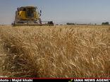 افزایش5.7 میلیون تنی تولید گندم در 5 سال