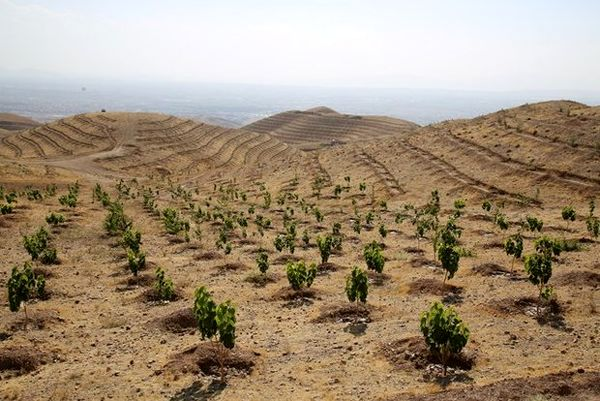 کاشت سراسری 14 میلیون اصله نهال در 31 استان کشور