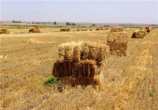 استفاده از  12هزار تن بقایای بخش کشاورزی در سال جاری