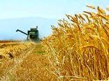 خرید تضمینی ۶ میلیون و ۶۹۰ هزار تن گندم از کشاورزان