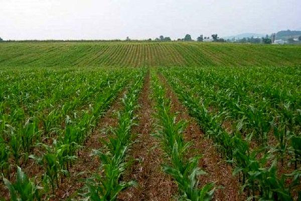 تولیدات کشاورزی اردستان پس از انقلاب ۱۱ برابر شد