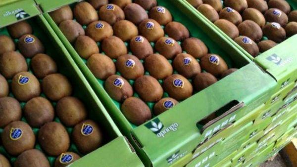 ممنوعیت صادرات زودهنگام کیوی