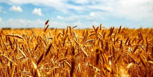 تعریف چهار پروژه بخش زراعت کردستان در راستای تحقق جهش تولید