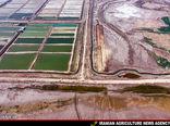 اقدامات جهاد کشاورزی در رفع بیابانزایی