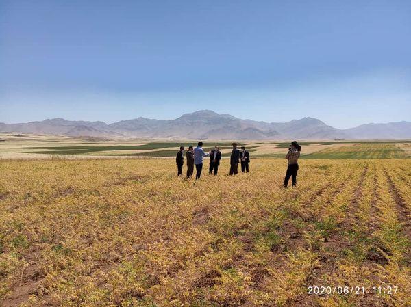 لرستان قطب تولید حبوبات در کشور