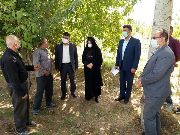 بازدید رییس سازمان جهاد کشاورزی استان قزوین از طرح عمومی آبیاری باغات روستای قدیم آباد