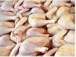 تولید 6800 تن گوشت سفید در نور/ ارزش اقتصادی 1500 میلیاردی