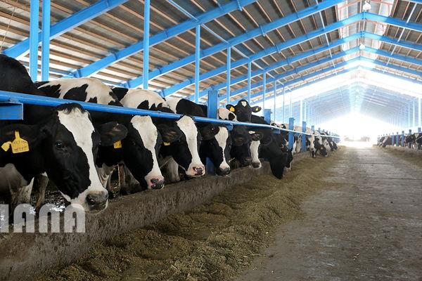 اختلاف 24 هزار تومانی در هزینهکرد و سود تولید شیر خام