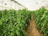 لزوم ثبت اطلاعات گلخانهداران در سامانه الکترونیک تجارت آسان برای تخصیص سوخت مایع