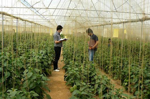 ۶۲۵ اشتغال در بخش کشاورزی استان قزوین ایجاد شد