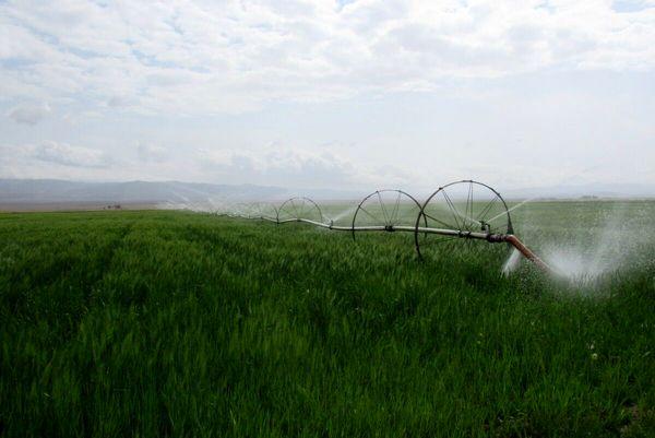 افزایش ۱۸۵ درصدی اجرای سیستم نوین آبیاری در شهرستان سربیشه