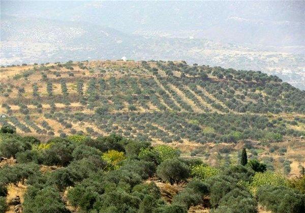 اجرای طرحهای اقتصاد مقاومتی در 380 هکتار از اراضی شیبدار ساری