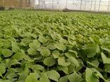تولید سالانه 120 میلیون نشاء در گلخانههای کازرون